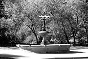 Horse And Buggy Posters - THE FOUNTAIN in BLACK AND WHITE Poster by Rob Hans