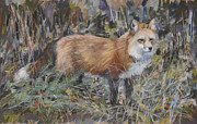 Vixen Paintings - The Foxy One by Mary Ann Cherry