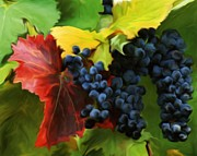 Painted Grapes Prints - The fruit of the vine Wine Galore. Print by Rianna Stackhouse