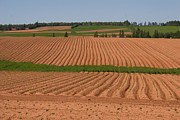 Pei Metal Prints - The Furrows In The Red Dirt Metal Print by Taylor S. Kennedy