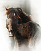 Wild Horses Prints - The Fury Print by Ron  McGinnis