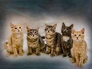 Cat Portraits Photo Prints - The Gang Print by Steven Richardson