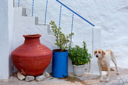 Northeastern Aegean Islands Prints - The Gard dog  Print by Emmanuel Panagiotakis