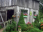 Shed Digital Art Posters - The Garden Shed Poster by J R Baldini M Photog Cr