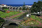 Gaspar Avila Framed Prints - The gardens of Ribeira Grande Framed Print by Gaspar Avila