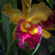 Orchids Digital Art - The Gift of Color by Joseph G Holland