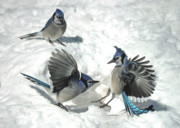 Blue Jays Prints - The Gladiators Print by Brian Pelkey