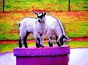 Goat Digital Art Metal Prints - The Goats Metal Print by Tim Mattox