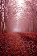 Photos Of Autumn Prints - The Golden Path Print by Aidan Minter