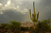 The Superstitions Prints - The Golden Saguaro  Print by Saija  Lehtonen