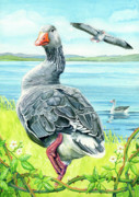 Celts Painting Posters - The Goose  Poster by Antony Galbraith