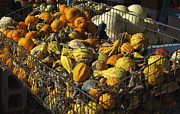 Fruit Stand Photos - The Gourds by Robert Frederick