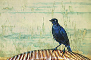 Common Metal Prints - The Grackle Metal Print by John Edwards