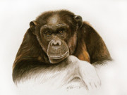 Chimpanzee Glass - The Grand Old Lady by Dag Peterson
