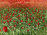 Poppies Field Paintings - The Grass Withers by Charlotte Smith