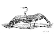Blue Heron Drawings Prints - The Great Blue Heron Print by Carmen Del Valle