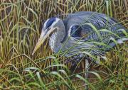 Great Blue Heron Paintings - The Great Blue Heron by Greg Halom