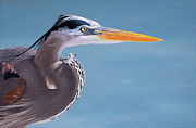 Stephen Janton - The Great Blue Heron