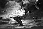 Geese And Moon Prints - The Great Migration . Black and White Print by Wingsdomain Art and Photography