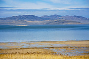 Antelope Island Framed Prints - The Great Salt Lake Framed Print by Marilyn Hunt