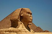 Zoomorphic Photos - The Great Sphinx of Giza by Joe  Ng