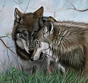 Wolves Pastels Framed Prints - The Greeting Framed Print by Deb LaFogg-Docherty