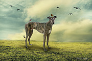 Greyhound Photo Posters - The Greyhound Poster by Ethiriel  Photography