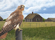 Red-tailed Hawk Paintings - The Grounds Keeper by Tammy  Taylor