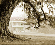 Drayton Hall Framed Prints - The Guardian Tree Framed Print by Jan Faul