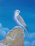 Gyr Falcon Posters - The Gyr Falcon Poster by Michael Allen