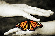 Orange And Brown Wings Posters - The Hands And The Butterfly Poster by Andee Photography
