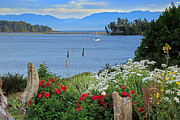 Sooke Prints - The harbor at Sooke Print by Louise Heusinkveld