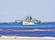 Shrimp Boat Prints - The Harvest Print by Betsy A Cutler East Coast Barrier Islands