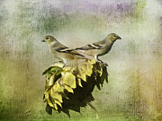 Finches Posters - The Harvesters Poster by Diane Schuster