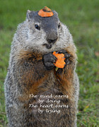Groundhog Photos - The heart earns by trying by Paul W Faust -  Impressions of Light