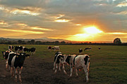 Martina Fagan - The Herd at Sunset