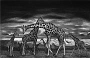 Safari Sketch Acrylic Prints - The Herd Acrylic Print by Peter Piatt