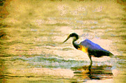 Fall Photos Painting Framed Prints - The herons Framed Print by Odon Czintos