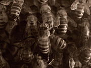 Bees Photos - The Hive by Jeff Breiman