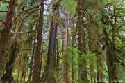 Sitka Photos - The Hoh Rain Forest by Heidi Smith
