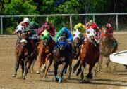 Racetrack Photos - The Home Stretch by Marc Bittan