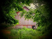 Horse Barn Photos - The Horse 2 by Michael L Kimble