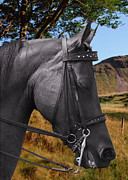 Horseback Photos - The horse - Gods gift to man by Christine Till