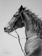 Horse Drawing Drawings - The Horse by Harvie Brown