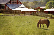 Barn Yard Photo Prints - The Horse In The Barn Yard Print by Kathy Jennings