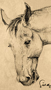 Mare Drawings - The horse portrait by Odon Czintos