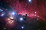 Space Exploration Art - The Horsehead Nebula by Robert Gendler
