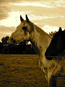 Tammy Olson - The Horses-1