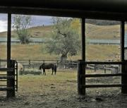 Chico Framed Prints - The Horses at Chico Framed Print by Janis Shortridge
