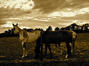 Paint Horse Posters - The Horses-pasture Poster by Tammy Olson